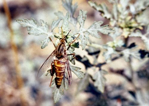 delhi sands flower loving fly essay